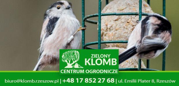 Dokarmianie ptaków Rzeszów