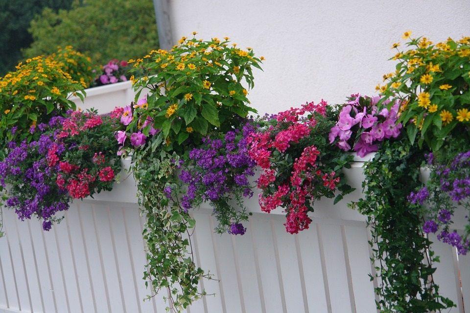 mini ogród na balkonie
