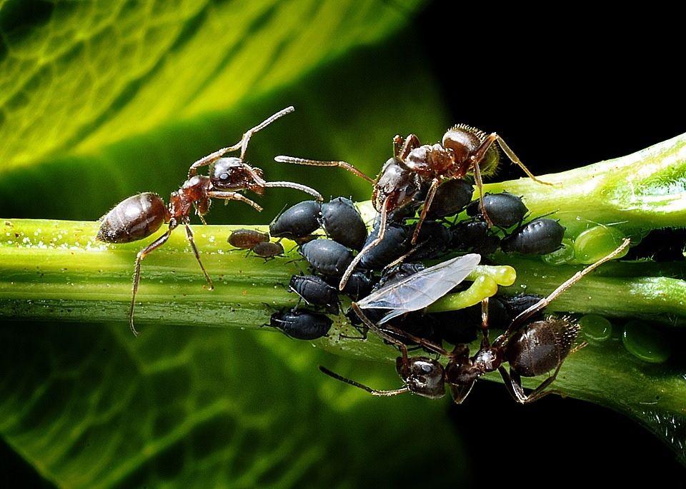 Środek na mrówki