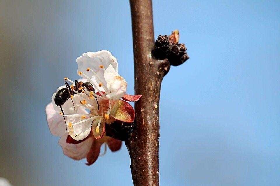 środki na mrówki
