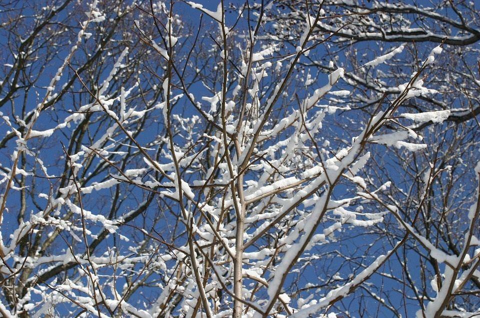 Zimowe zabiegi w sadzie